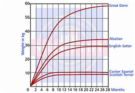 golden retriever growth calculator related keywords suggestions for large growth chart