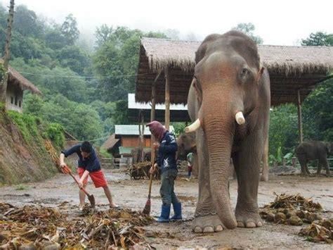 象そして象使いとの大切なコミュニケーション picture of thai elephant home mae