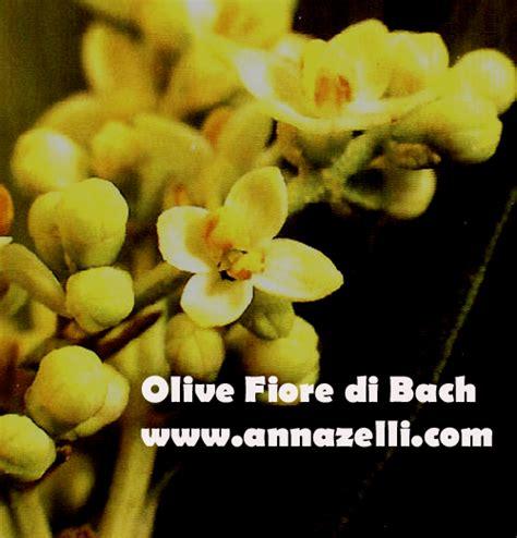 olive fiori di bach i 38 fiori di bach descrizione i 38 fiori di bach