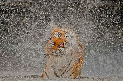 winners of the national geographic photographer contest 2014 est100 一些攝影 some photos winners of the national