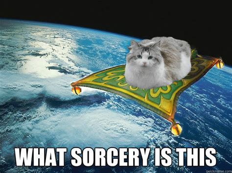 What Is This Meme - what sorcery is this halo the magic cat quickmeme