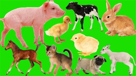 Animal Farm Keeps Desktop Clean by Animals Farm Baby Find Animals Farm Name And Sounds