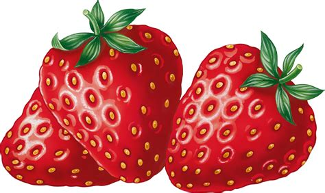 strawberry clipart strawberry clipart clipartion com