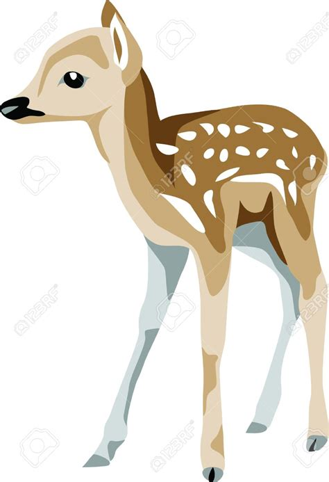fawn images fawn feeding clipart clipground