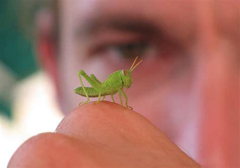 tiny tainy tiny animals on fingers featured creature