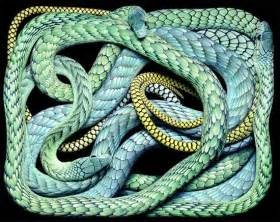 snake colors facts around us photographs of a dangerous snakes