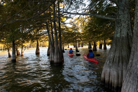 Mississippi State Parks With Cabin Rentals by Lake Chicot State Park Delta Cground Visit Arkansas