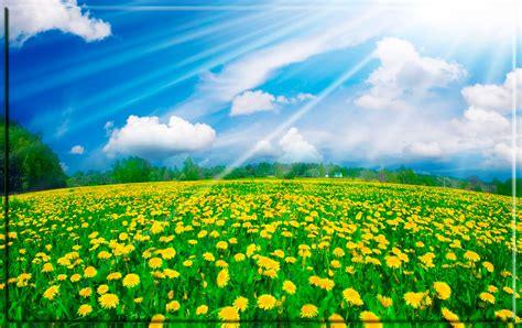 interesantes y bonitos fondos de escritorio de flores fondo pantalla bonito paisaje flores