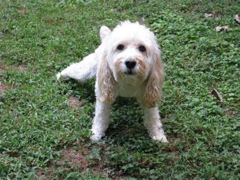how to break my dog from peeing in the house the grass can be greener dog pee as natural lawn care