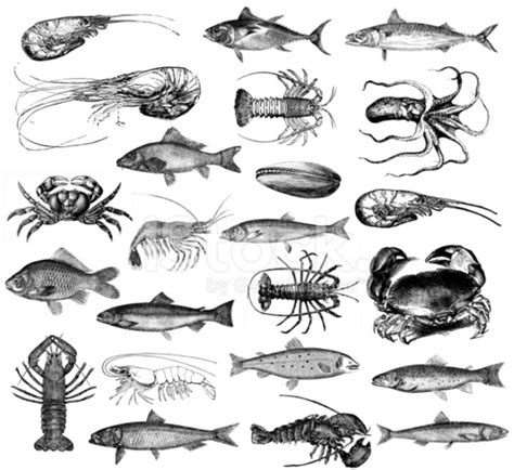 seafood illustrations fish, lobster, prawns, clams, crab