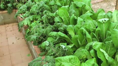 Vegetable Garden Arizona Winter Vegetable Garden In 12 22 10