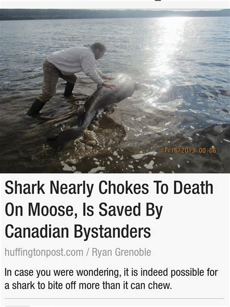Meanwhile In Canada Thechive | meanwhile in canada thechive