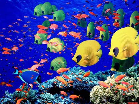 wallpaper colorful fish and interactive water moving ocean desktop backgrounds animated wallpaper 3d