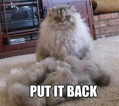 Funny Angry Cat Meme - 20 lol animals 2 23 13 pleated jeans