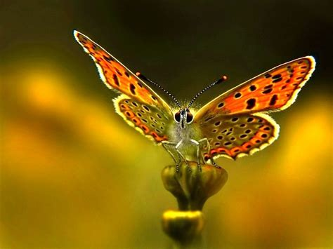 imagenes de mariposas moviendose mariposas wallpapers fondos de pantalla butefly