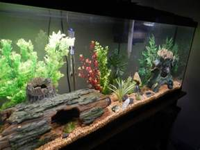 Aquarium Decoration Ideas Freshwater 10 Gallon Fish Tank Maintenance Decoration Ideas 2017