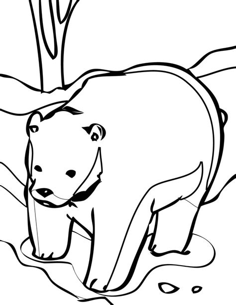cute bear coloring pages free printable bear coloring pages for kids