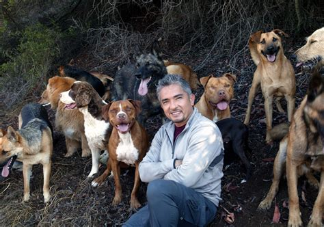 whisperer with cesar millan cesar millan cesar millan photo 2108354 fanpop