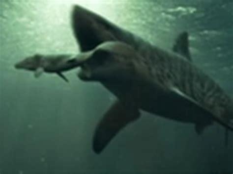 mosasaurus :: videolike