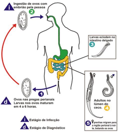 cadena epidemiologica trichuris trichiura viviane ascarid 237 ase e ancilostomose ten 237 ase e