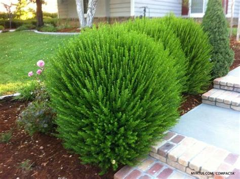 creative landscape ideas  big impact shrubs