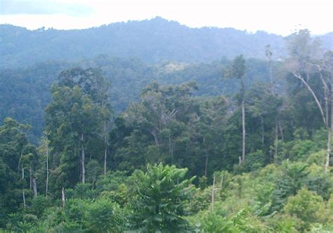 indonesia characteristics forestry learning characteristic of rainforests