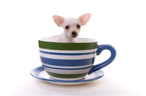 smallest dog ever | www.pixshark.com images galleries