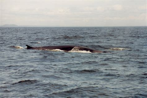 buzzards bay boat accident a whales tale 171 sailing buzzards bay