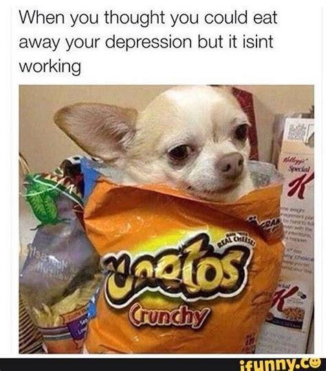 Memes De Chihuahua - 25 best ideas about chihuahua meme on pinterest