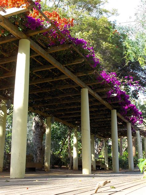 what is a pergola farmers tip 33 what is the difference between a trellis arbor and pergola