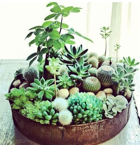 Shallow Planter For Succulents by Shallow Succulent Dish And Growing A Lemon Tree From