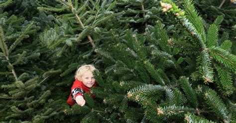what to do with your christmas tree how to recycle it for