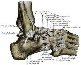 aussen len sprunggelenksarthrose arthrose im sprunggelenk und