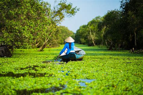 viet nam or vietnam top 4 must visit forests in mekong delta vietnam eviva