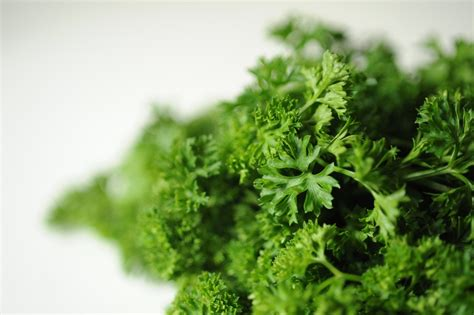 Parsley Detox Side Effects by Five Health Benefits Of Parsley And A Detoxifying Shake