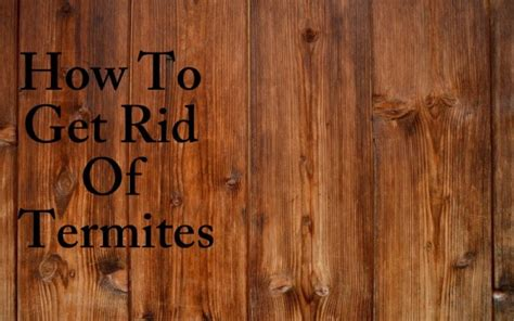 home remedies to get rid of termites