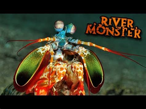 the mantis shrimp!!! feed and grow   ep9 vidoemo