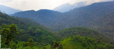 Image Gallery mountain gorilla habitat