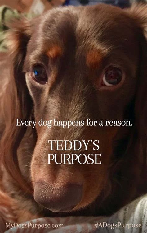 the dogs purpose a s purpose in theaters january 27 lifestyle