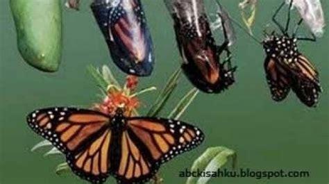 Pengorbanan Seekor Kupu Kupu jangan takut dengan perubahan karena kupu kupu yang indah bisa muncul dari seekor ulat