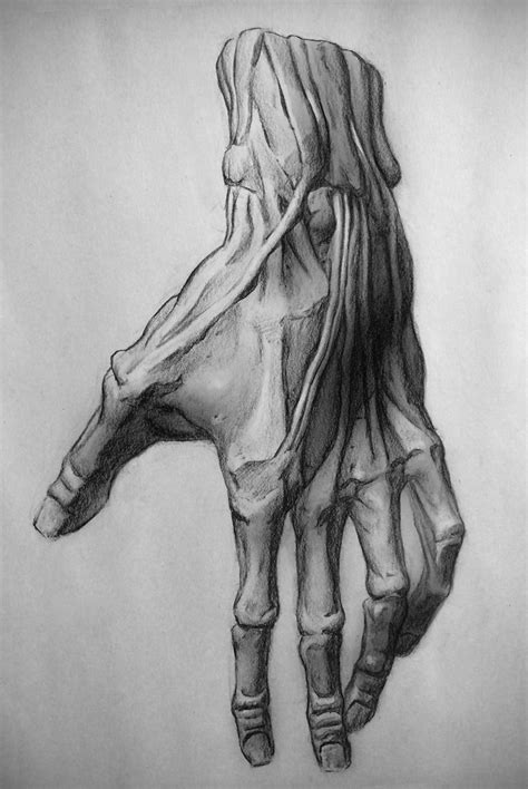 Drawing The Anatomy
