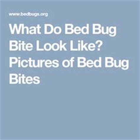 What Like In Bed by 1000 Images About Pictures Of Bed Bugs On Bed