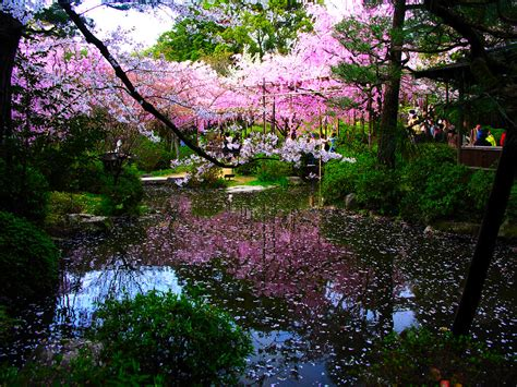 Flower Garden Japan Japanese Garden Pictures Japan Garden Flowers Photo
