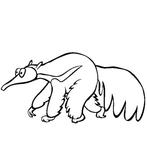 anteater drawing cliparts co