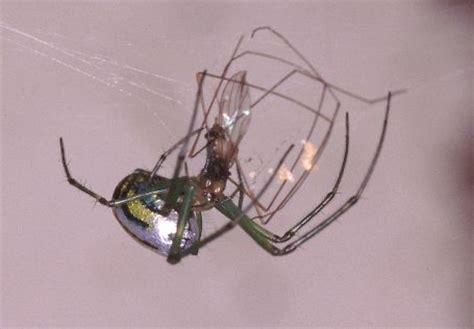 Are Spiders Attracted To Light by Spider Photo Gallery Ojibway Nature Centre