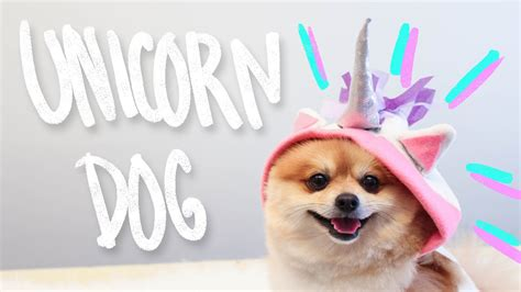 unicorn puppy diy unicorn clothes hello dudettes
