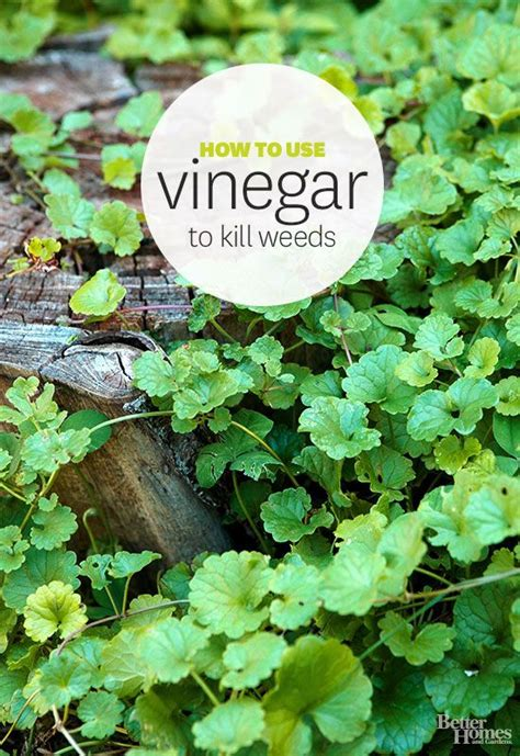 how to kill weeds in a vegetable garden vinegar and window cleaner on