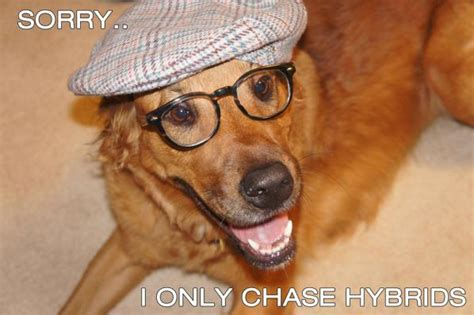 Hipster Dog Meme - to make you laugh hipster dog says