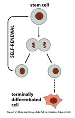 cell bio review: stem cells / reprogrammed cells