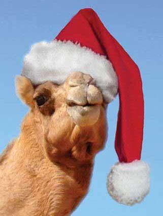 christmas camels perl mongers log of past meetings